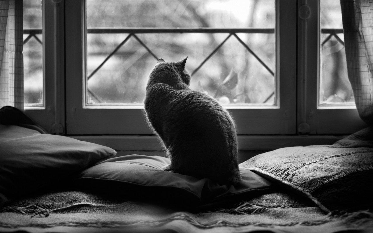 D couvrez mon nouveau texte a mon chat laisse for Fenetre noir