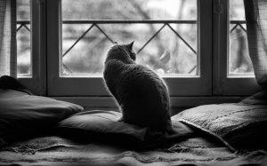 chat-devant-fenetre-noir-blanc